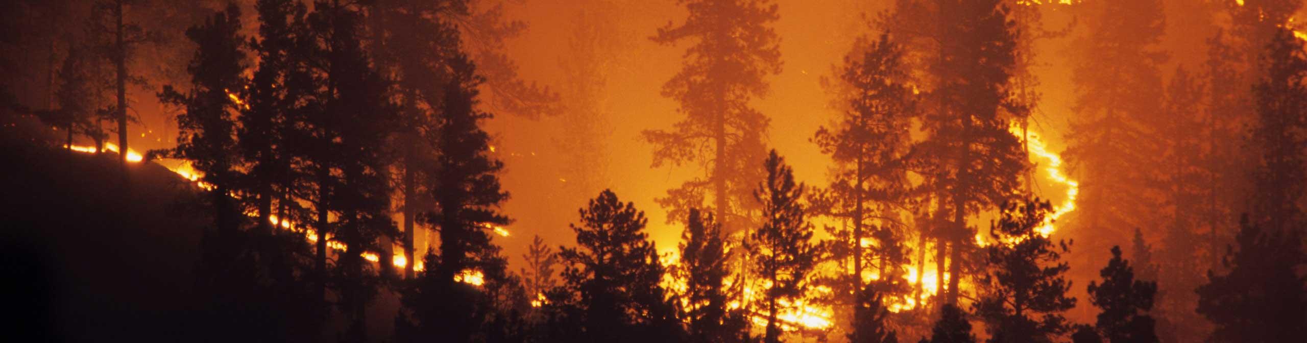 bushfire_attack_legislation-optimize.jpg